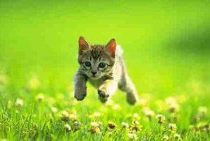 cat-speed